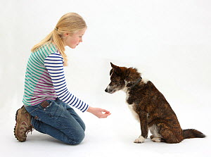 Girl offering to shake hands with mongrel dog. Model released - Mark Taylor