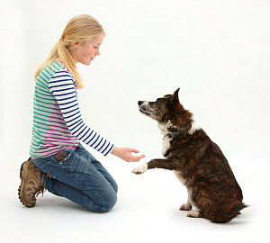 Girl offering to shake hands with mongrel dog.Model released - Mark Taylor