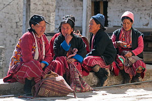 Ladies in traditional Monpa tribe dress (typical head dress made from Yak hair) during Torgya festival. Galdan Namge Lhatse Monastery,Tawang, Arunachal Pradesh, India. January 2014. - Bernard Castelein