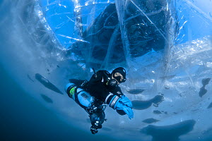 Diver swims under clear transparent ice (1m thick) with minivan visible above. Lake Baikal, Russia, March 2012. - Olga Kamenskaya