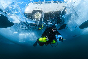 Diver swims under clear transparent ice (1m thick) with vehicle visible above. Lake Baikal, Russia, March 2012. - Olga Kamenskaya