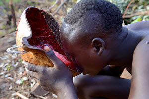 Suri / Surma cattle herder drinking from bowl of cow's blood. Omo river Valley, Ethiopia, September 2014. - Eric Baccega