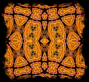 Kaleidoscope pattern formed from picture of Bearded Dragon (Pogona vitticeps) EMBARGOED FOR NAT GEO UNTIL the end of 2015 - Michael  D. Kern