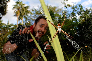 Man looking frightened by spider, Silver Argiope (Argiope argenta) on web, Florida, USA, March 203.  -  Clay Bolt
