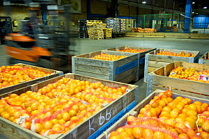 Fruit from Suikerbossie farm at a central warehouse in Cape Town, ready to be taken to market. South Africa.  -  Cheryl-Samantha  Owen