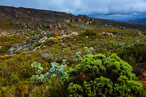 Fynbos habitat and cliffs at Pakhuis Pass, Clanwilliam, Cederberg Mountains, Western Cape province, South Africa, September 2012.  -  Juan  Carlos Munoz
