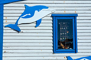 Cartoon dolphins attached to side of building, Lambert's Bay, Western Cape province, South Africa, September 2012.  -  Juan  Carlos Munoz