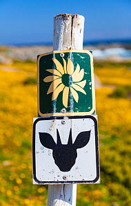 Sign for antelope and wildflowers, with yellow flowers in background, Postberg Trail, West Coast National Park, Western Cape province, South Africa, September 2012. - Juan  Carlos Munoz