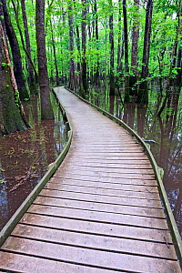 The Boardwalk Trail in Congaree National Park, South Carolina, USA. - Kirkendall-Spring