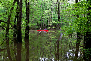 Two people canoeing in the distance in Congaree National Park near Wise Lake, South Carolina, USA.  Model Released.  -  Kirkendall-Spring