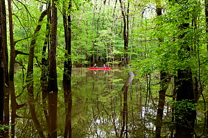 Two people canoeing in the distance, Congaree National Park near Wise Lake, South Carolina, USA.  Model Released.  -  Kirkendall-Spring