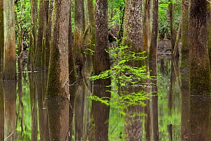 A small gut or creek along the River Trail in Congaree National Park, South Carolina, USA. - Kirkendall-Spring