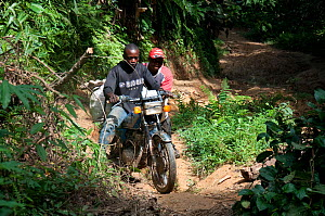 Ituri Forest Pygmy guides on motor bike, Democratic Republic of the Congo, Africa, December 2011. - Steve O. Taylor (GHF)