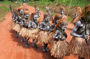 Mbuti Pygmy boys in traditional blue body paint and straw skirts, on way to forest to undergo initiation ceremony, which is a right of passage into manhood. Ituri Rainforest, Democratic Republic of th... - Steve O. Taylor (GHF)