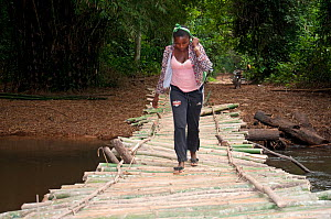 Local woman crossing bamboo bridge, Ituri Forest , Democratic Republic of the Congo, Africa, December 2011.  -  Steve O. Taylor (GHF)