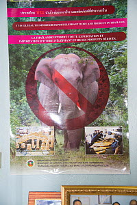 Anti-pouching poster stating that it is illegal to import or export elephant ivory into Thailand, Nakhon Sawan, Thailand, 2013. - Steve O. Taylor (GHF)