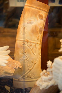 Carved Mammoth (Mammuthus) ivory tusks, for sale in shop on Nathan Road, Kowloon, Hong Kong, December 2012.  -  Steve O. Taylor (GHF)