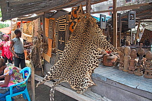 Leopard skin (Panthera pardus) for sale at Matche de la Volier (Market of the Thieves), Kinshasa, Democratic Republic of the Congo. May 2012.  -  Steve O. Taylor (GHF)