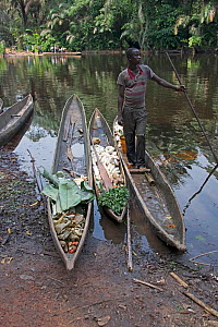 Man with vegetables in dugout wooden canoes on riverbank, Monkoto, Salonga National Park, Equateur, Democratic Republic of the Congo, May 2012.  -  Steve O. Taylor (GHF)
