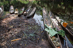 Dugout wooden canoes on bank of river, Salonga National Park, Equateur, Democratic Republic of the Congo, May 2012.  -  Steve O. Taylor (GHF)