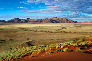 View from a high dune across desert landscape in morning light. Namib Rand, Namibia. April 2012.  -  Hougaard Malan