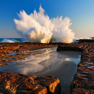Large wave crashing against rock shelf. Luphathana, Pondoland, Eastern Cape, South Africa. June 2012.  -  Hougaard Malan