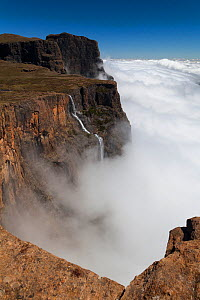 Tugela falls surrounded by clouds on a misty morning. Royal Natal National Park, Drakensberg, South Africa. November 2010.  -  Hougaard Malan