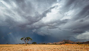 Thunderstorm over a dry desert landscape. Namib Rand, Namibia. March 2014. Non-ex.  -  Hougaard Malan