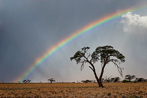Thunderstorm and rainbow over a dry desert landscape. Namib Rand, Namibia. April 2012. Non-ex.  -  Hougaard Malan