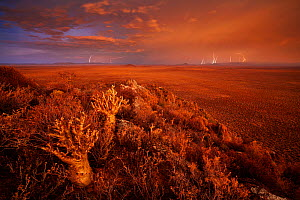 Thunderstorm at sunset over the plains of the Karoo. Western Cape, South Africa. January 2012. Non-ex.  -  Hougaard Malan