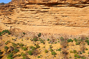 Bandiagara escarpment with ancient Tellem dwellings. Mali, 2005-2006. - Steve O. Taylor (GHF)