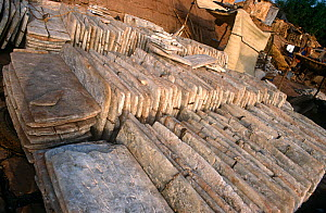 Rock salt from the north of Mali, for sale at Mopti market. Mali, 2005-2006.  -  Steve O. Taylor (GHF)