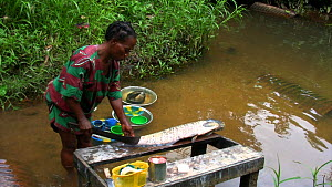 Preparing Food,Food Preparation,People,African Descent,Woman,Preparation,Africa,Central Africa,Gabon,Gabonese Republic,Moving Image,Footage,Sound,Food,Flowing Water,River,Outdoors,Freshwater,Water,Res... - Woman standing in a river preparing a fish, Waka National Park,