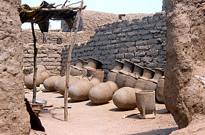 Large terracotta storage pots outside potter's work shop, rural Chad, 2002-2003.  -  Steve O. Taylor (GHF)