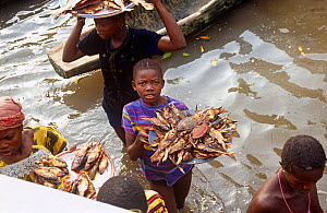 Villagers selling smoked fish and crabs, Sherbro island, Sierra Leone, 2004-2005.  -  Steve O. Taylor (GHF)
