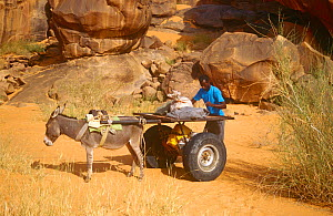 Man with donkey pulling  homemade cart at ancient rock painting site, Guilemsi, central Mauritania, 2004.  -  Steve O. Taylor (GHF)
