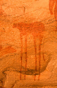 Ancient rock painting of animal figure, Guilemsi, central Mauritania, 2004. - Steve O. Taylor (GHF)
