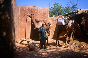 Hausa trader delivering goods by camel, Mirriah, southern Niger, 2005.  -  Steve O. Taylor (GHF)