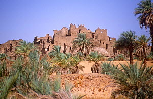 Ancient fort and oasis at Segedine on the desert trail to southern Libya. Niger, 2005.  -  Steve O. Taylor (GHF)