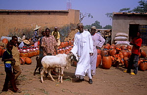 Market traders with goat and terracotta pots, Mirriah market, southern Niger, 2005.  -  Steve O. Taylor (GHF)