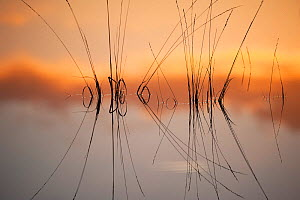 Reflection in fen on surface of water, Klein Schietveld, Brasschaat, Belgium, November. - Bernard Castelein