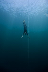 William Trubridge, a world champion free diver who is campaigning to protect the Critically Endangered Maui's dolphin (Cephalorhynchus hectori maui) endemic to New Zealand. January 2008.  Editorial us... - Richard Robinson
