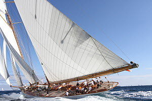 'Elena' racing during Les Voiles De St Tropez regatta, St Tropez, France, October 2013. All non-editorial uses must be cleared individually. - Ingrid  Abery