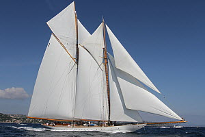 Schooner 'Elena' with all sails up, Les Voiles De St Tropez regatta, St Tropez, France, October 2013. All non-editorial uses must be cleared individually. - Ingrid  Abery