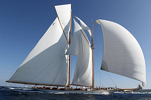 Schooner 'Elena' with all her sails up at Les Voiles De St Tropez regatta, St Tropez, France, October 2013. All non-editorial uses must be cleared individually. - Ingrid  Abery