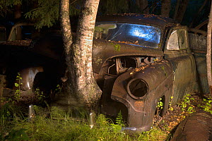 Birch tree (Betula sp) growing up through old rusting car at night. Bastnas car graveyard, Sweden, July. Winner of the Portfolio category in the Melvita Nature Images Awards competition 2014. - Pal Hermansen