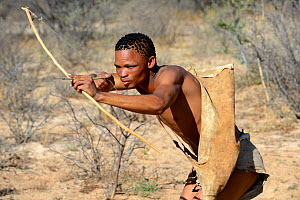 Naro San Bushman hunting in the bush with traditional bow and arrow, Kalahari, Ghanzi region, Botswana, Africa. Dry season, October 2014.  -  Eric Baccega