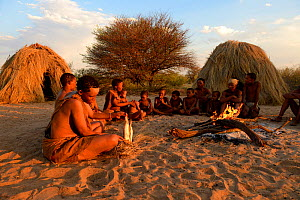 Naro San Bushmen family sitting around fire, woman peeling the root of a kombrua plant which is nutritious and thirst-quenching. Kalahari, Ghanzi region, Botswana, Africa. Dry season, October 2014.  -  Eric Baccega