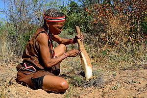 Naro San woman in the bush, peeling the root of a kombrua plant which is nutritious and thirst-quenching. Kalahari, Ghanzi region, Botswana, Africa. Dry season, October 2014.  -  Eric Baccega