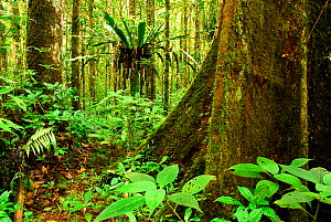 Tropical forest, Andasibe-Mantadia National Park, Madagascar, March 2005.  -  Enrique Lopez-Tapia